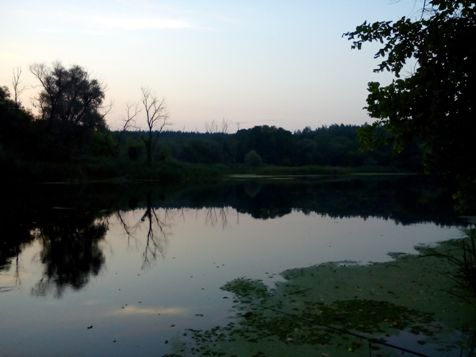 весенний карась на реке